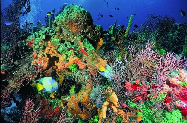 Cozumel-Snorkeling-Tours-2